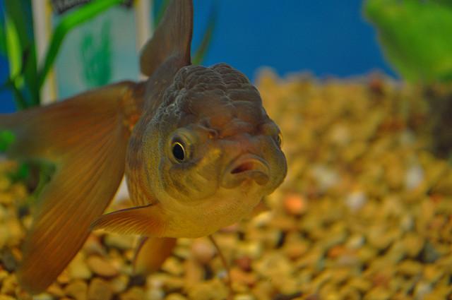 April fish.jpg